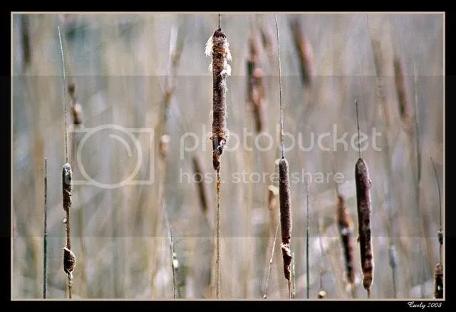 Bullrushes, Quadrus Centre, Boldon