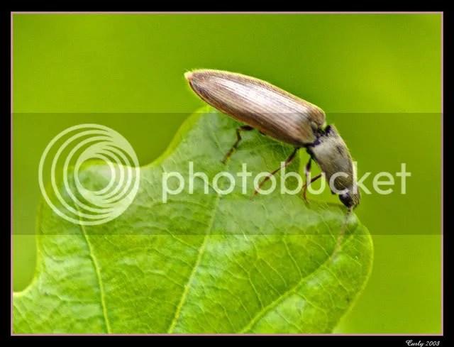 Beetle, River Don, Jarrow