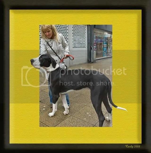 Great Dane, King Street, South Shields