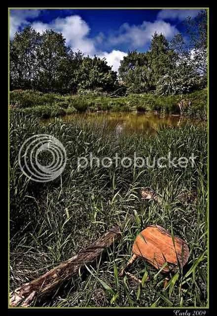 Pond near River Don, Jarrow