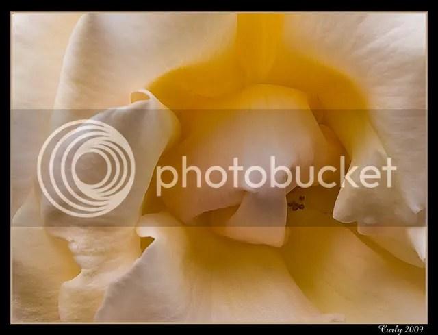 Rose, Readhead Park, South Shields