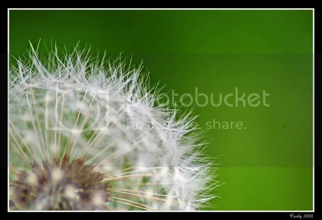 Dandelion, South Shields