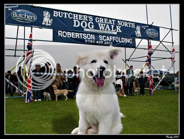Great North Dog Walk, South Shields, 2007 start line