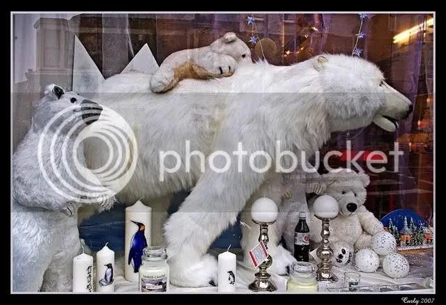 polar bear, south shields