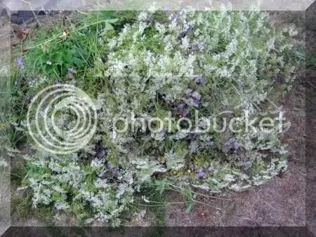 bloemenvoorkransen.jpg
