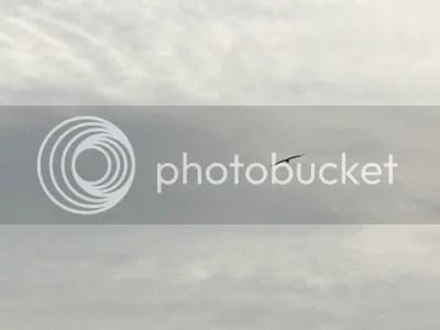 photo 9993231e-74ba-4252-964c-e88af4cc2802.jpg