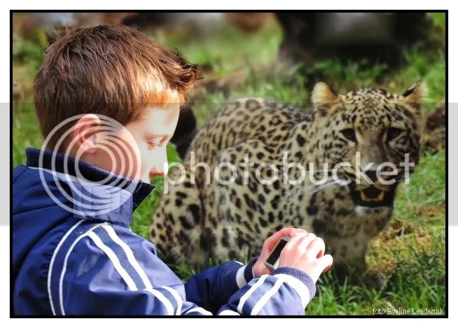 DSC_8609a.jpg luipaard picture by fotomus
