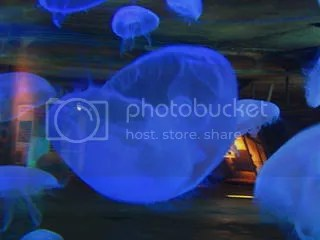 Jellyfish at the uShaka Aquarium