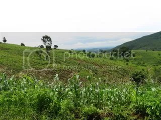 Fields on hills, nearing Ntchisi forest