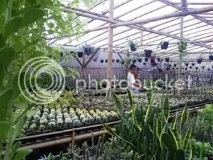 kaktus - courtesy indra kh
