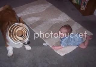 Here Doggie Doggie!