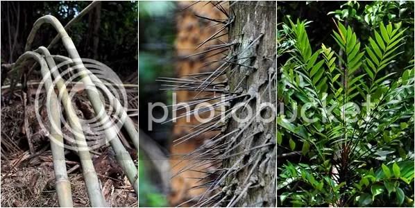 Bako's Flora & Fauna