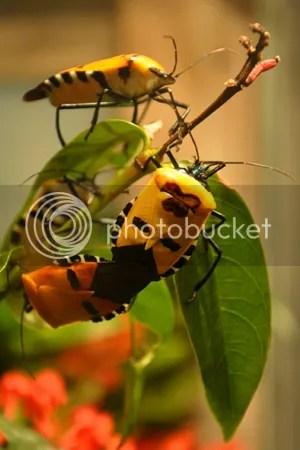 Butterfly Farm main