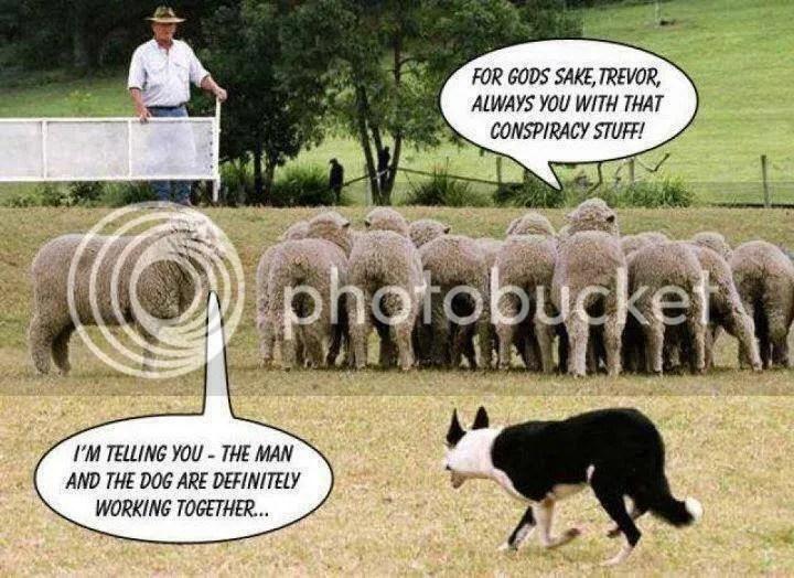 photo sheepconspiracy_zpsorekitfe.jpg