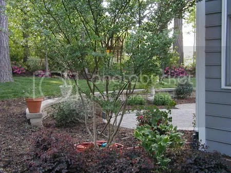 No hardscapes in landscaping (Raleigh, Cary: HOA, new home ... on Uphill Backyard Landscaping Ideas id=29089
