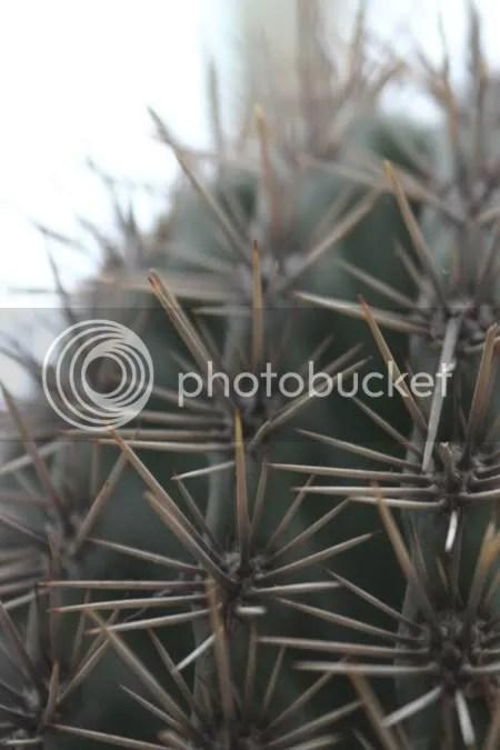 Een cactus uit de vrije hand... (poging 4)