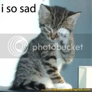 cute-kitten-crying.jpg image by cari