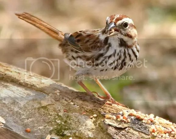 Sparrow Song photo webss2.jpg