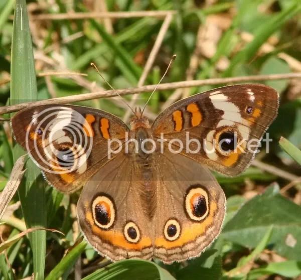Buckeye photo bf2.jpg