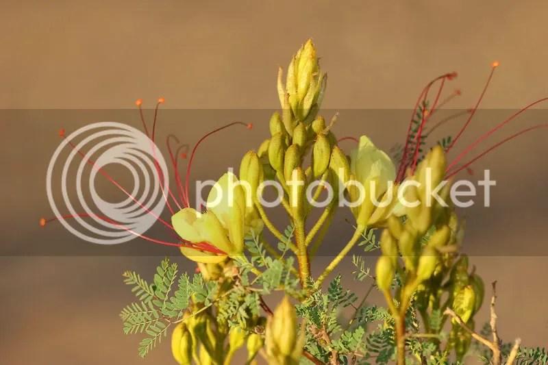 photo Flower4.jpg