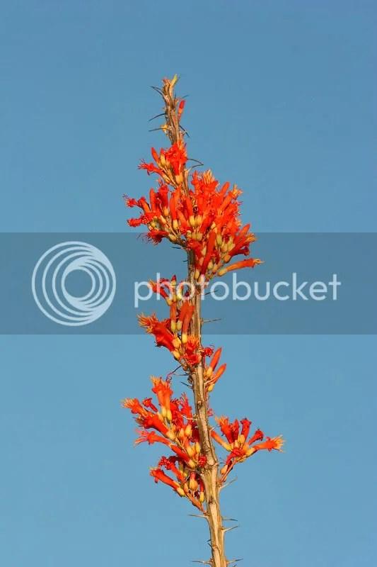 photo Flower7.jpg
