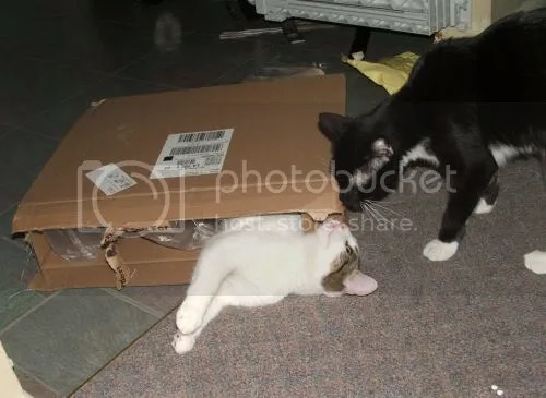 Hugo and Charlie and the box