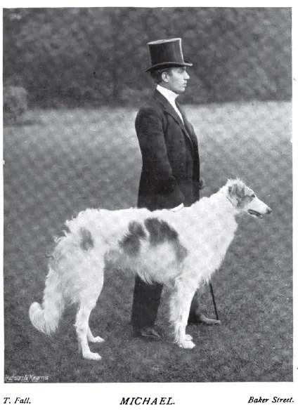1899 Borzoi photo 1899_Borzoi-2.jpg