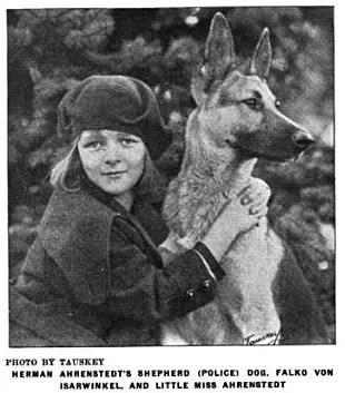 1920 German Shepherd photo 1920gsd.jpg