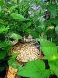 Bird feeder in the middle of the garden