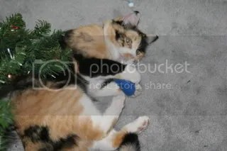 Morgans extra happy with HER new (Catnip containing) toy!
