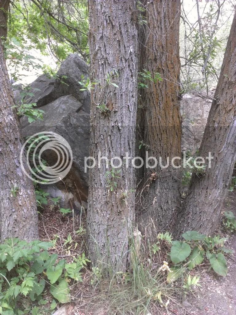 Giant Fallen Granite Boulder & Trees