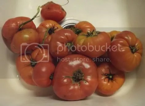 tomatoes in sink