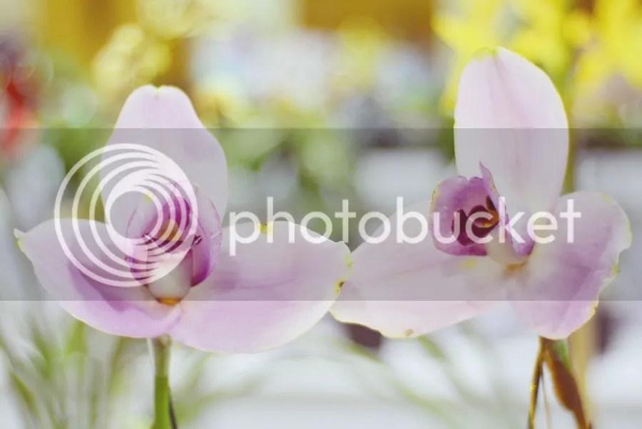 photo DSC_2334-1_zpsqfv3xuwb.jpg