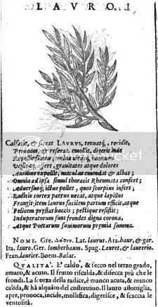Laurel, Herbario novo
