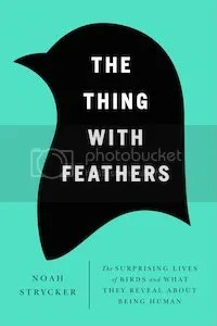 photo 08 thing with feathers_zpsvsohxw9f.jpg