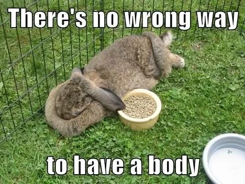 bunny with caption