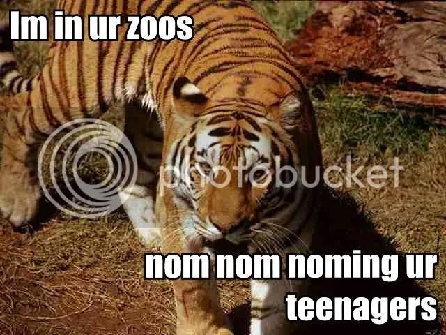San Francisco Zoo Tiger Attack