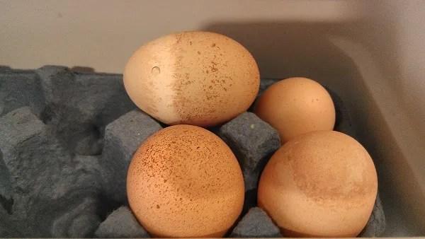 photo egg2.jpg