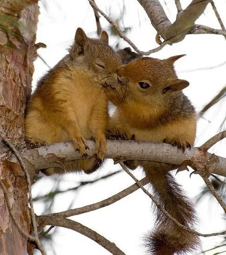 Embracing the Squirrel (6/6)