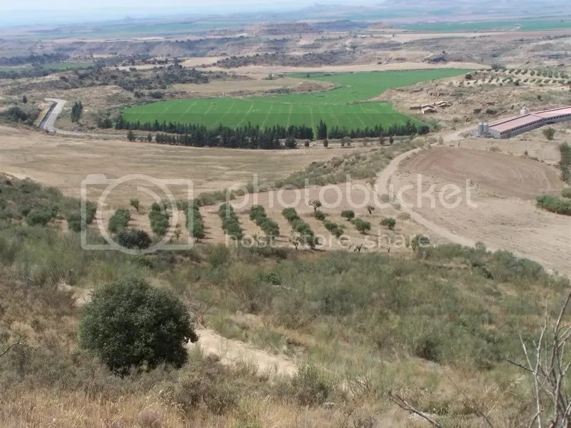 Olive trees on the rented piece of land in the middle of this photo.
