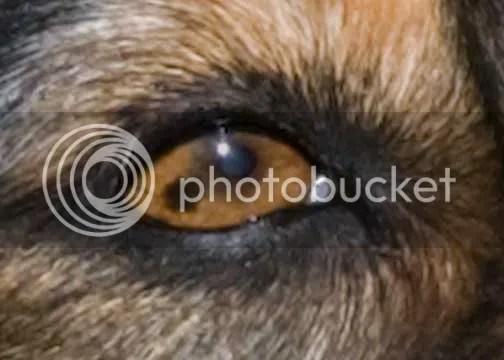 Dark Spot Eyeball