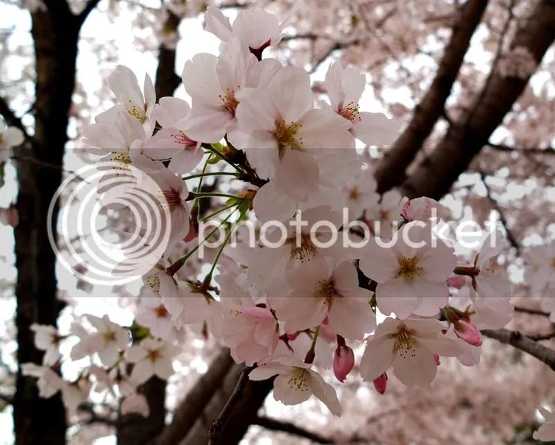 photo 28. flowers.jpg