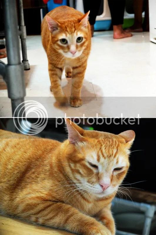 photo ginger 2.jpg