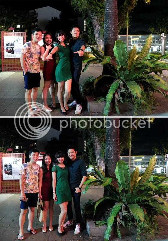 photo ferns.jpg