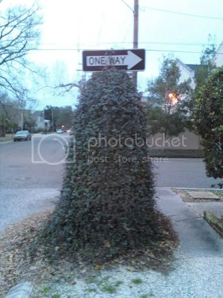 Overgrown Sign