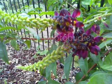 Perty Flower