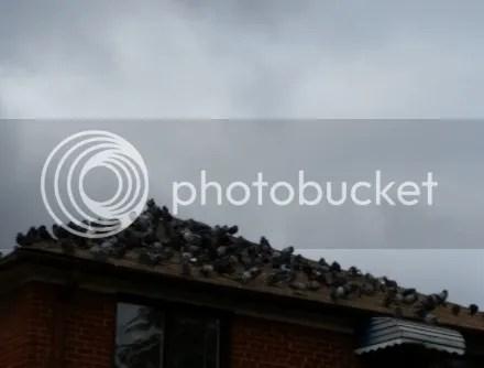 Ominous Pigeons