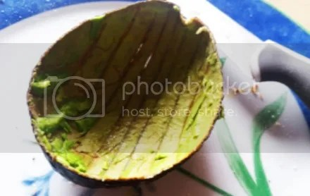 Avocado Shell