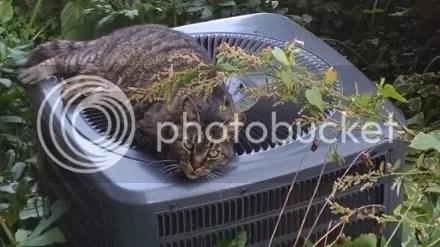 Cat on the AC