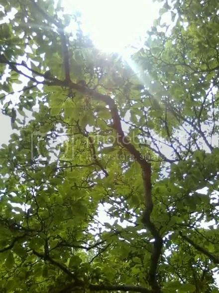 Tree Glare
